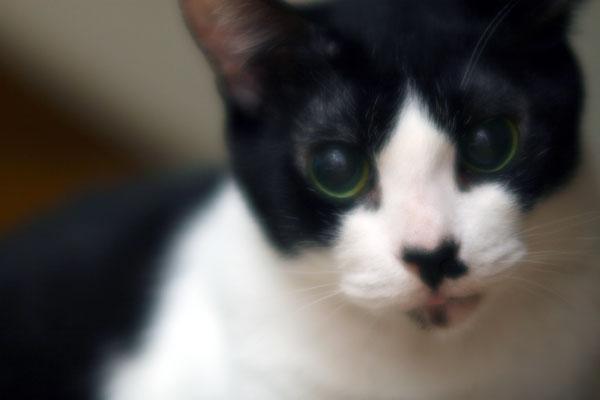 猫ポートレート#2_b0081177_2113338.jpg