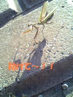 f0121712_10371629.jpg