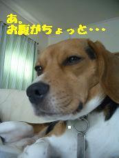 b0098660_132636.jpg