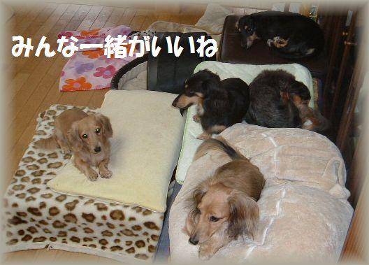 b0059087_20124332.jpg