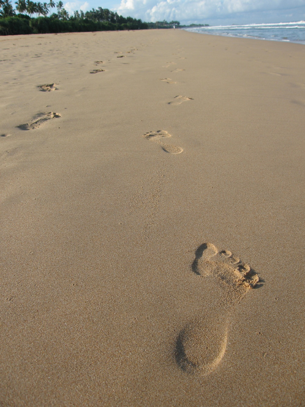 はじめの一歩の画像 p1_35