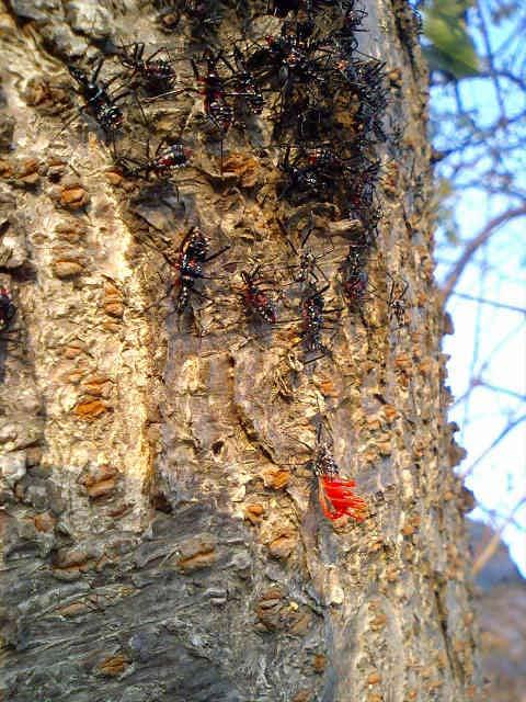 沼沿いの桜の木で見つけた虫_b0025008_15512479.jpg