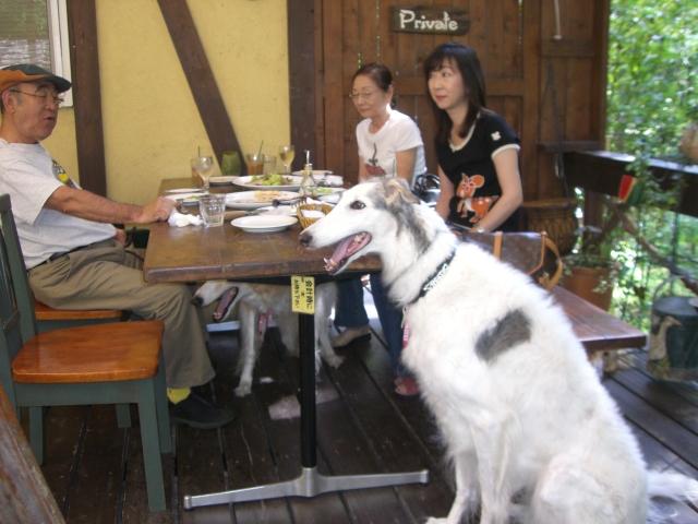 同時にご来店のCat&Dogs_f0111415_23194020.jpg