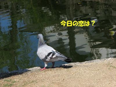 c0037200_6215150.jpg