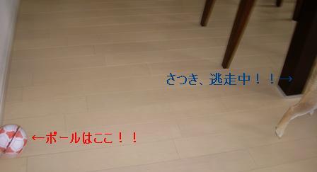 f0004309_14473945.jpg