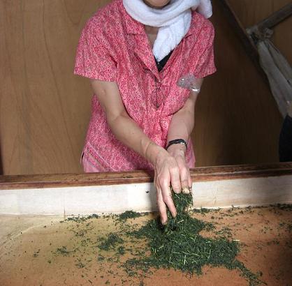 金谷での体験・・・No.4 「手揉み茶を作る」_c0079828_23141924.jpg