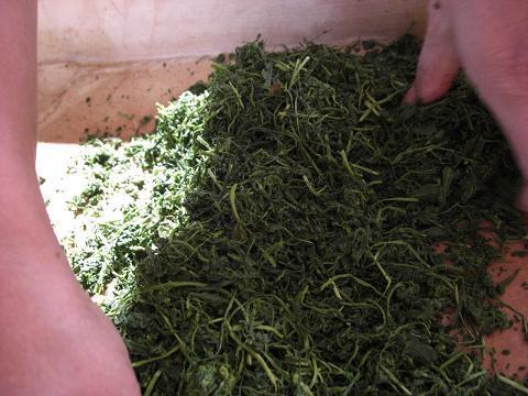金谷での体験・・・No.4 「手揉み茶を作る」_c0079828_23182296.jpg
