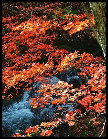 秋いろ:奥多摩の紅葉_d0123528_16585744.jpg