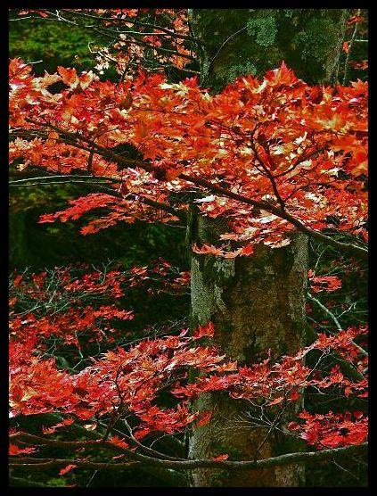 秋いろ:奥多摩の紅葉_d0123528_17133598.jpg