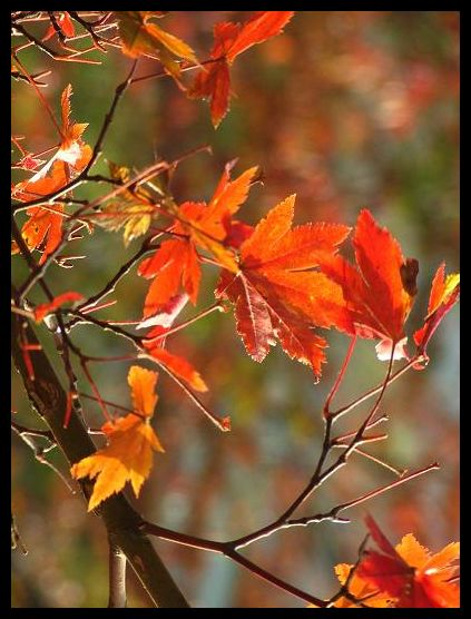 秋いろ:奥多摩の紅葉_d0123528_17165424.jpg