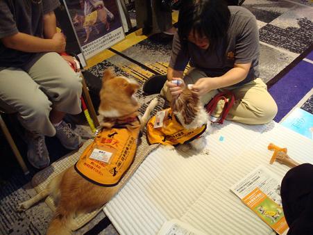 日本臨床獣医学フォーラム(JBVP)のお話_c0099133_1462188.jpg