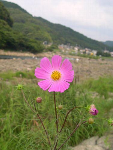 瀬田川_b0025947_2013243.jpg