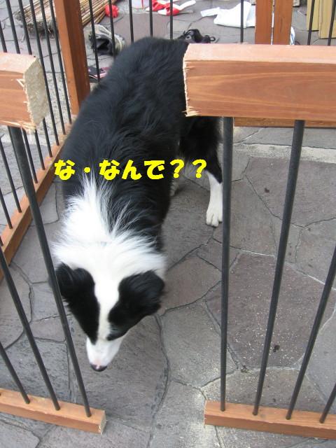 e0117976_14181049.jpg