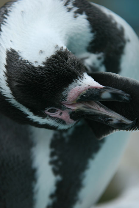 ペンギンの油_a0012103_1192621.jpg