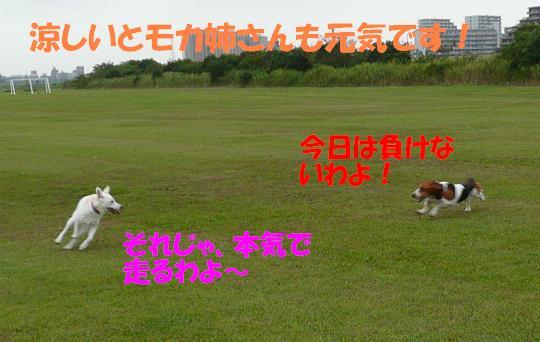 f0121712_161428.jpg