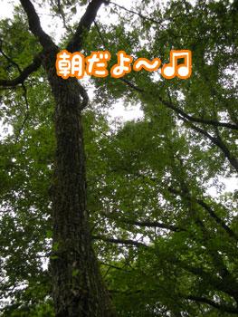 f0129214_1034432.jpg