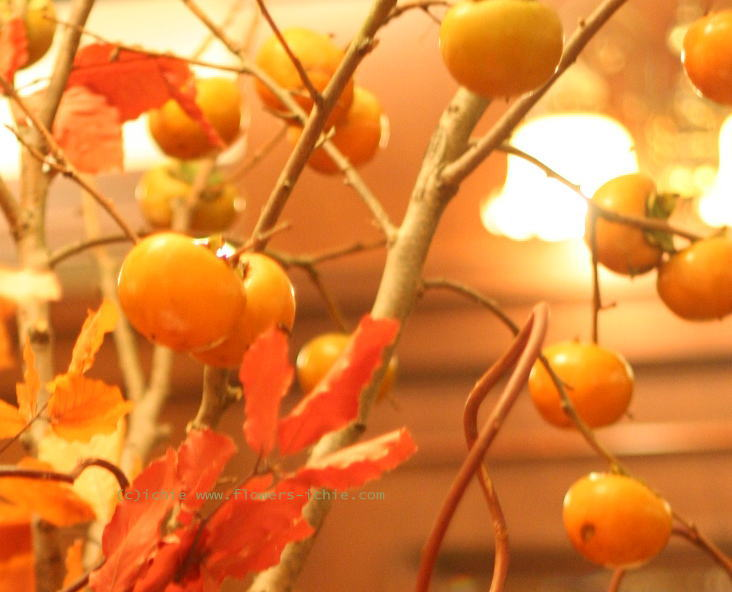 季節の花 _a0042928_23493394.jpg