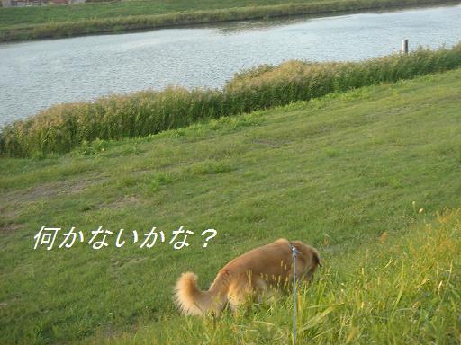 f0114128_21461380.jpg