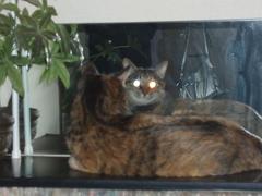 猫と鏡_e0065433_19393923.jpg