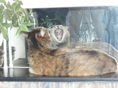 猫と鏡_e0065433_19402553.jpg