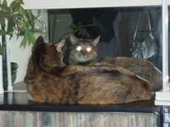 猫と鏡_e0065433_19405115.jpg