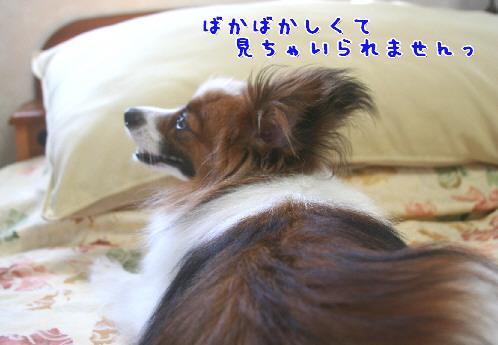 d0013149_1050101.jpg