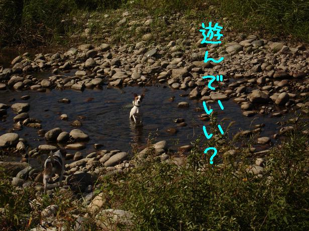 f0132772_22194597.jpg