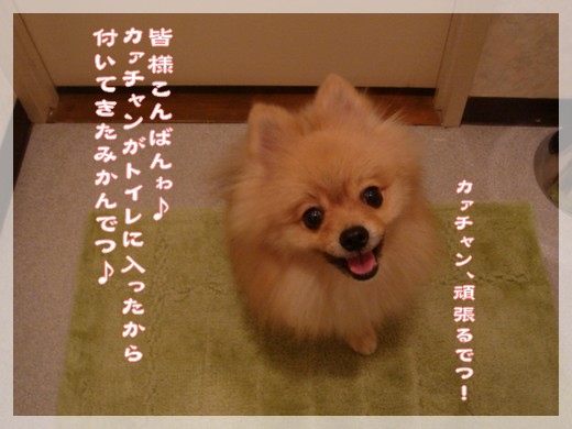 b0078073_21394180.jpg
