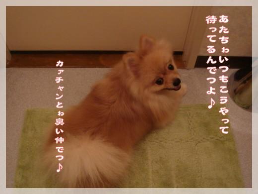 b0078073_21433344.jpg