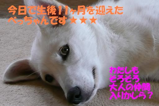 f0121712_1854382.jpg