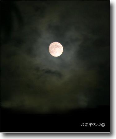 f0111147_2356689.jpg