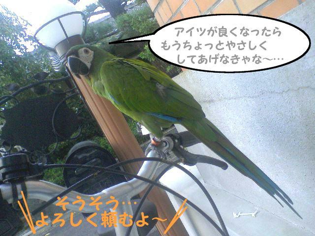 f0132055_9312712.jpg
