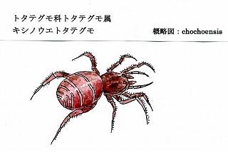 地下室の忍者・・・「キシノウエトタテグモ」_d0019074_5455077.jpg