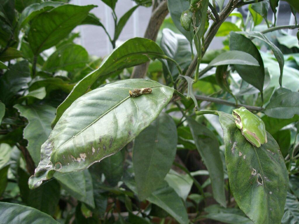 カエルが芋虫を食べた瞬間_f0018078_7214032.jpg