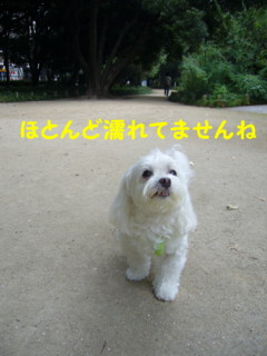 f0145192_167050.jpg