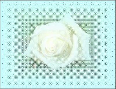 d0048312_1427155.jpg