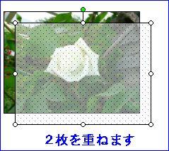 d0048312_1431595.jpg