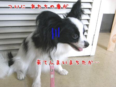 d0013149_10101382.jpg