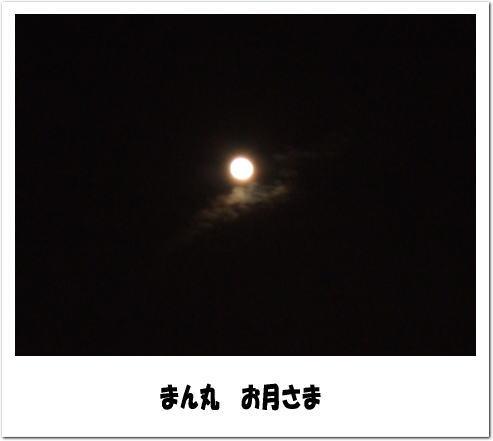 f0004182_2156115.jpg