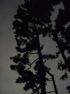 松闇 お寺に松が多いわけ_c0069903_71742.jpg