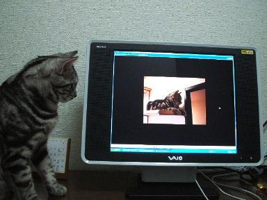 ネコ、寝床にて_b0114004_21314448.jpg