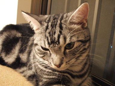 ネコ、寝床にて_b0114004_21315227.jpg