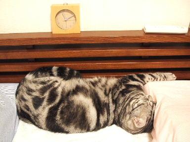 ネコ、寝床にて_b0114004_2132230.jpg