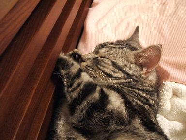 ネコ、寝床にて_b0114004_21322631.jpg