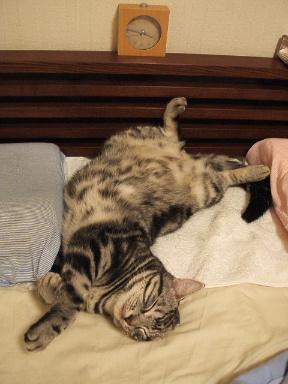 ネコ、寝床にて_b0114004_21325661.jpg