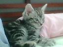 ネコ、寝床にて_b0114004_21354693.jpg