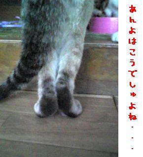 c0103205_22494171.jpg