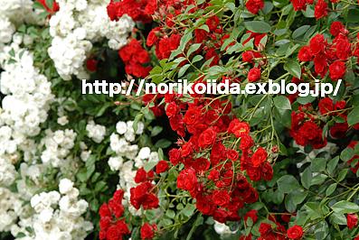 d0086230_15251111.jpg