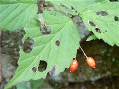 植物観察会・日向山2007秋_f0019247_0231952.jpg