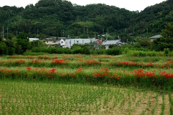 田園風景_b0093754_23574586.jpg